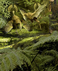 Caudipteryx displaying beautiful plumage as part of the mating ritual.