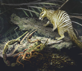 A Megazostrodon is startled by an approaching scorpion.