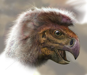 Ingenia portrait  a small oviraptor from south Mongolia.