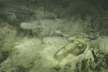 Underwater scene showing different trilobites living together.
