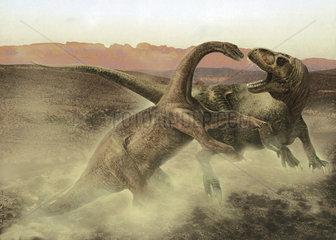Sinraptor fighting a juvenile Bellusaurus.