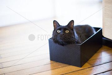 Cat lying in box