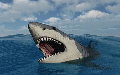 A giant Megalodon shark.
