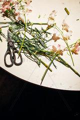 Schnittblumen Zubereitung auf Kuechentisch