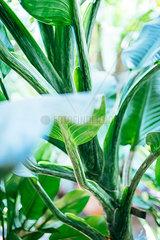 Detail einer pflanzlichen Verzweigung