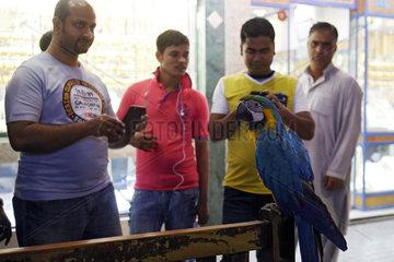 Dubai  Vereinigte Arabische Emirate  Maenner betrachten einen Gelbbrustara