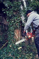 ein Mann faellt mit einer Motorsaege einen Baum  Froschperspektive