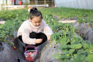 CHINA-HEBEI-HENGSHUI-FARM-TOURISM (CN)