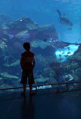 Dubai  Vereinigte Arabische Emirate  Junge vor dem Dubai Aquarium der Mall of Dubai