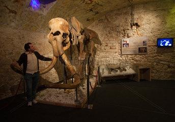 Barcelona  Spanien  Mammut-Skelett im Museo del Mamut de Barcelona