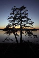 Vaestervik  Schweden  Silhouette einer Kiefer bei Daemmerung an einem See