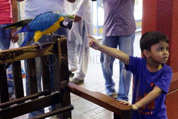 Dubai  Vereinigte Arabische Emirate  kleiner Junge zeigt auf einen Gelbbrustara