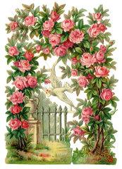 Rosenbluete  Rosengarten  Fruehlingsgefuehle  1895