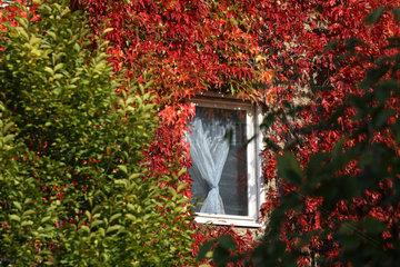 Berlin  Deutschland  Plattenbau mit Herbstlaub