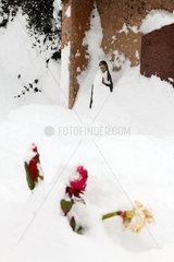 Feld am See  Oesterreich  zugeschneiter Grabstein und Blumen im Schnee auf dem Friedhof in Feld am See