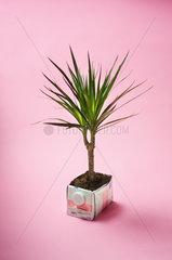 Hamburg  Deutschland  ein Tetrapack als Blumentopf fuer eine Palme