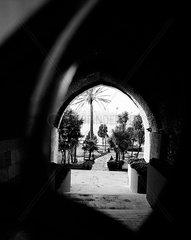 Palmen im Garten des Sepetçiler Pavillon am Ufer des Bosporus  Kennedy Ave  Istanbul