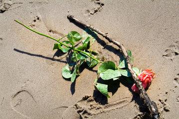 Hamburg  eine Rose und ein Ast auf einem Strand