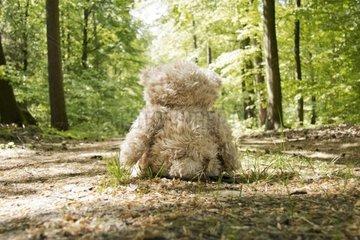 Stoffteddy verlassen auf einem Waldweg