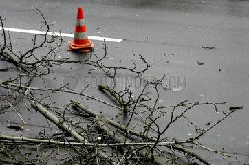 Baumpflege in der Bonner Innenstadt
