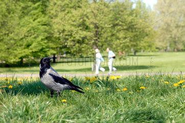 Berlin  der Britzer Garten