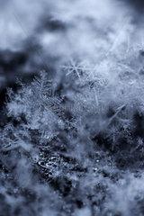 Berlin - Die Eiskristalle von frisch gefallenen Schneeflocken