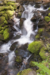 Water flowing over mossy rocks  Olympic National Park  Washington  USA