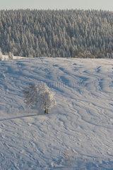 Freiburg  Deutschland  Winter auf dem Hausberg Schauinsland