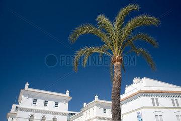 Spanien  grosse Palme vor einem weissen Gebaeude in Cadiz