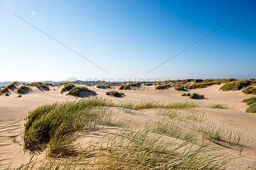 Germany  Schleswig-Holstein  Sylt  sand dunes