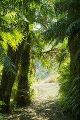 Path through tropical trees