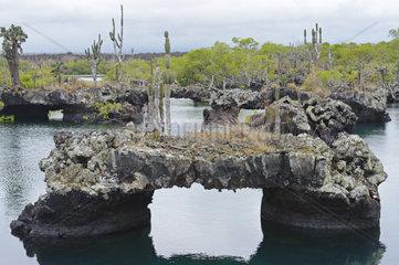 Gebiet von Los Tuneles mit Lavaformationen und Bruecken  Suedwestspitze der Insel Isabela  Galapagos  Unesco Welterbe  Ecuador  Suedamerika
