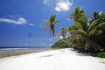 Palmen am sandigen Strand von Anse Parnel  Tropisches Paradies an der Suedost Kueste von Mahe  Hauptinsel der Seychellen