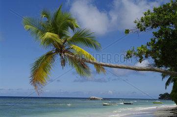 Palmenstrand an der Beau Vallon  tropisches Paradies an der Nordkueste von Mahe  Seychellen