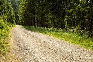 Austria  Styria  empty forest track