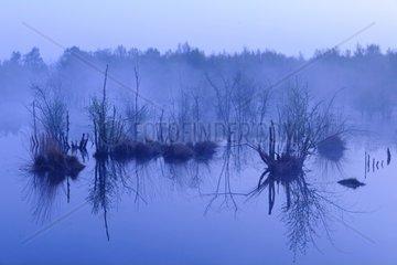 Blaue Stunde im Moor