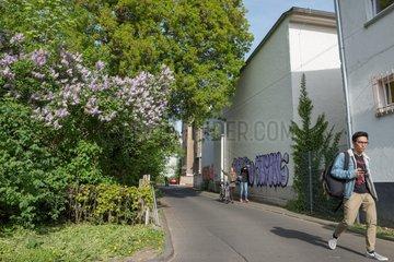 Hausecken  lila Graffiti  Eichenlaub und Flieder