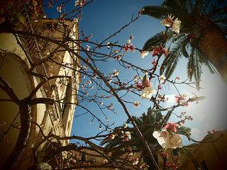 Fruehlingsblumen in Noto