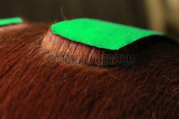 Neuenhagen  Deutschland  Pferdehaare stellen sich unter einem Kinesio-Tape auf