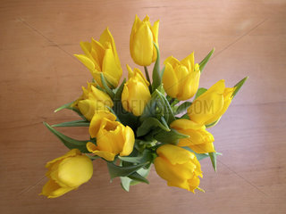 gelbe Tulpen. yellow tulips