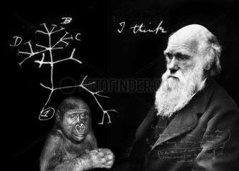Charles Darwin ( 1809 - 1882 )  Portraet mit Zeichnung des Baumes der Evolution