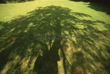 Schatten einer Kastanie auf einer Wiese  shadow of a chestnut tree