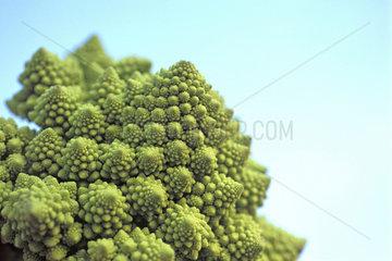 gruener Kohl  green cabbage