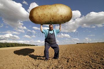 dicker Bauer hebt grosse Kartoffel auf dem Feld - Gentechnik