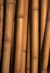 Bambusstangen  bamboo