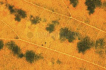 gelbes Blatt  yellow leaf