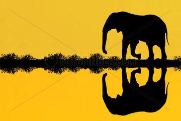 Afrikanischer Elefant spiegelt sich im See