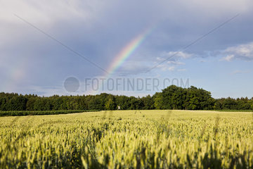 Regenbogen ueber einem Kornfeld