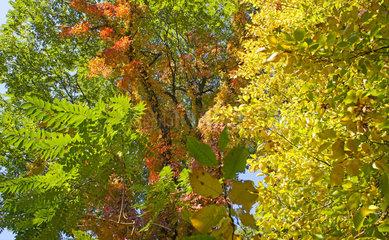 Deutschland  Brandenburg  Wald im Herbst  forest
