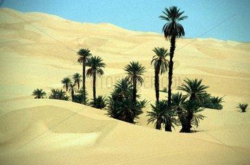 Palmen in Sandduenen
